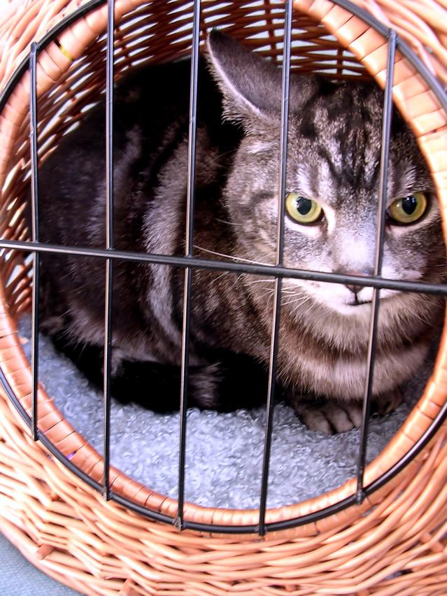 Kastrace psa / feny - Jak poznat dobrého veterináře